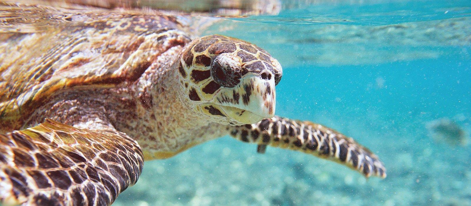 Seychellen: Höhepunkte des Inselparadieses Urlaub 3