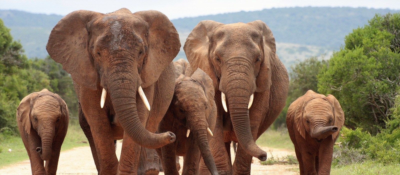 South Africa – Western and Eastern Cape Tour Trip 5