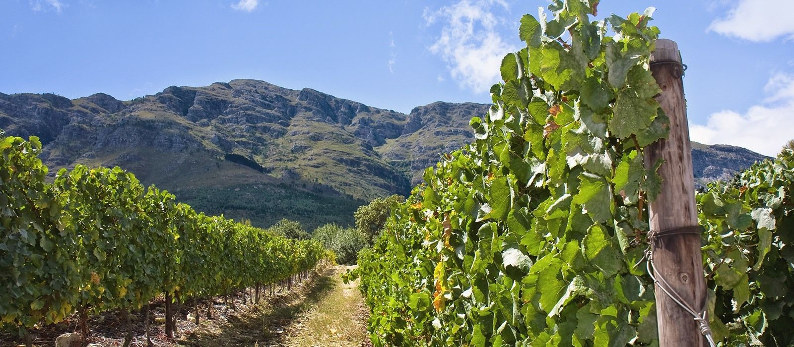 Südafrika, Sambia & Botswana: Safaris, Wein und Wasserfälle Urlaub 6