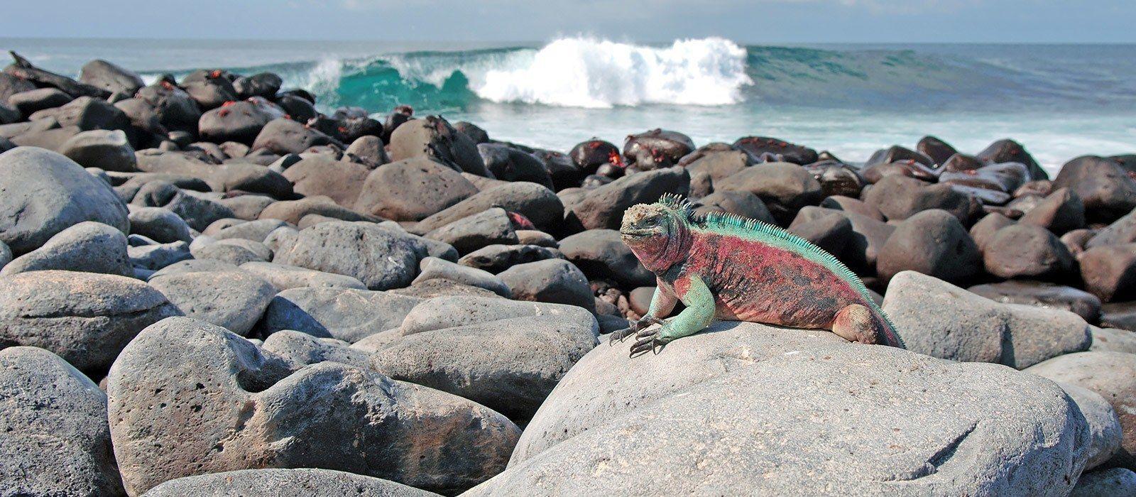 Reiseziel Isla Isabela Ecuador/Galapagos
