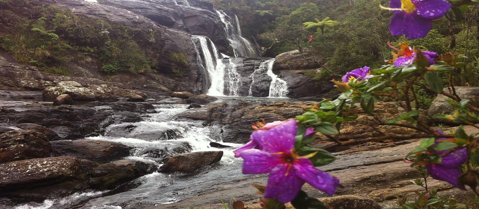 Exclusive Travel Tips for Your Destination Nuwara Eliya in