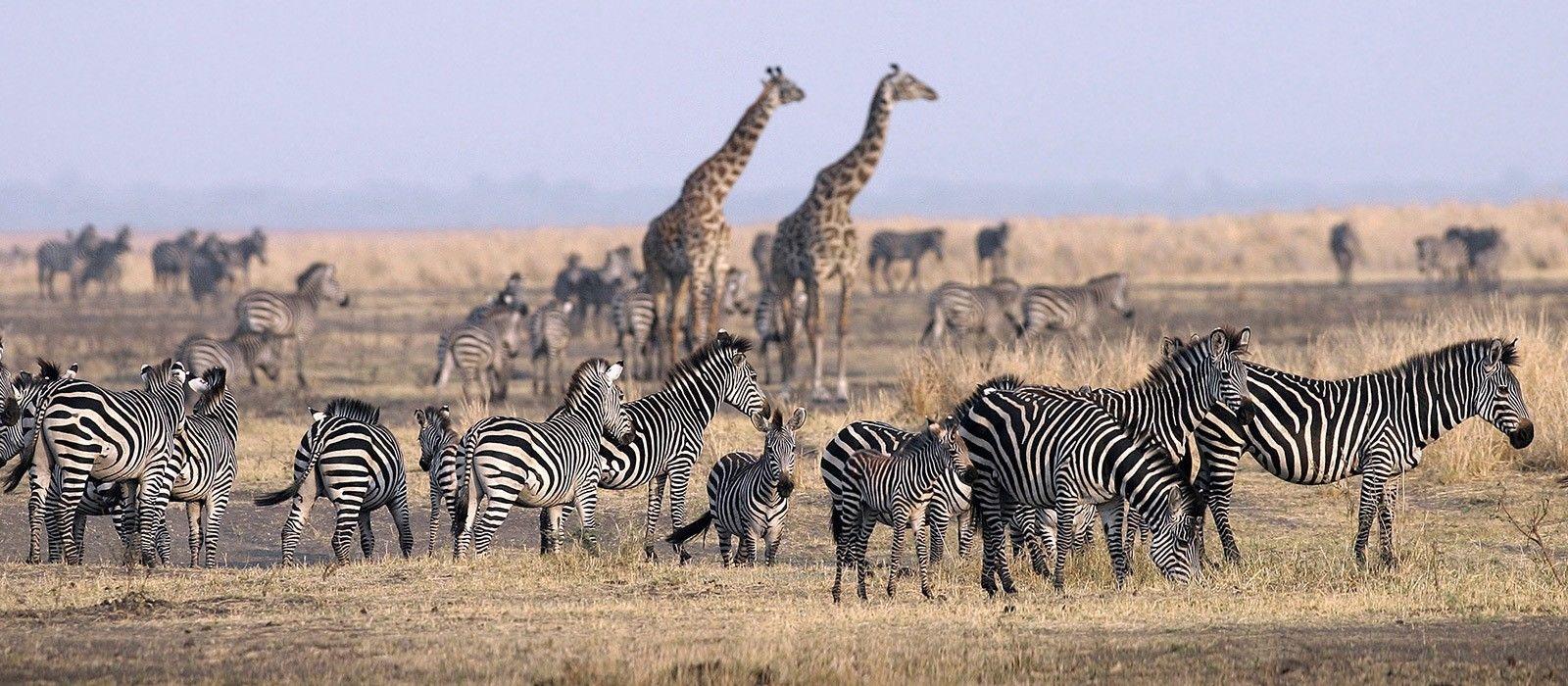 Tanzania: From Kilimanjaro to Zanzibar Tour Trip 5