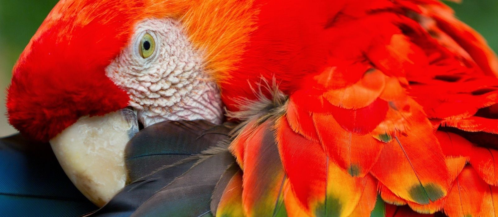 Peru: Andes and Amazon Tour Trip 10