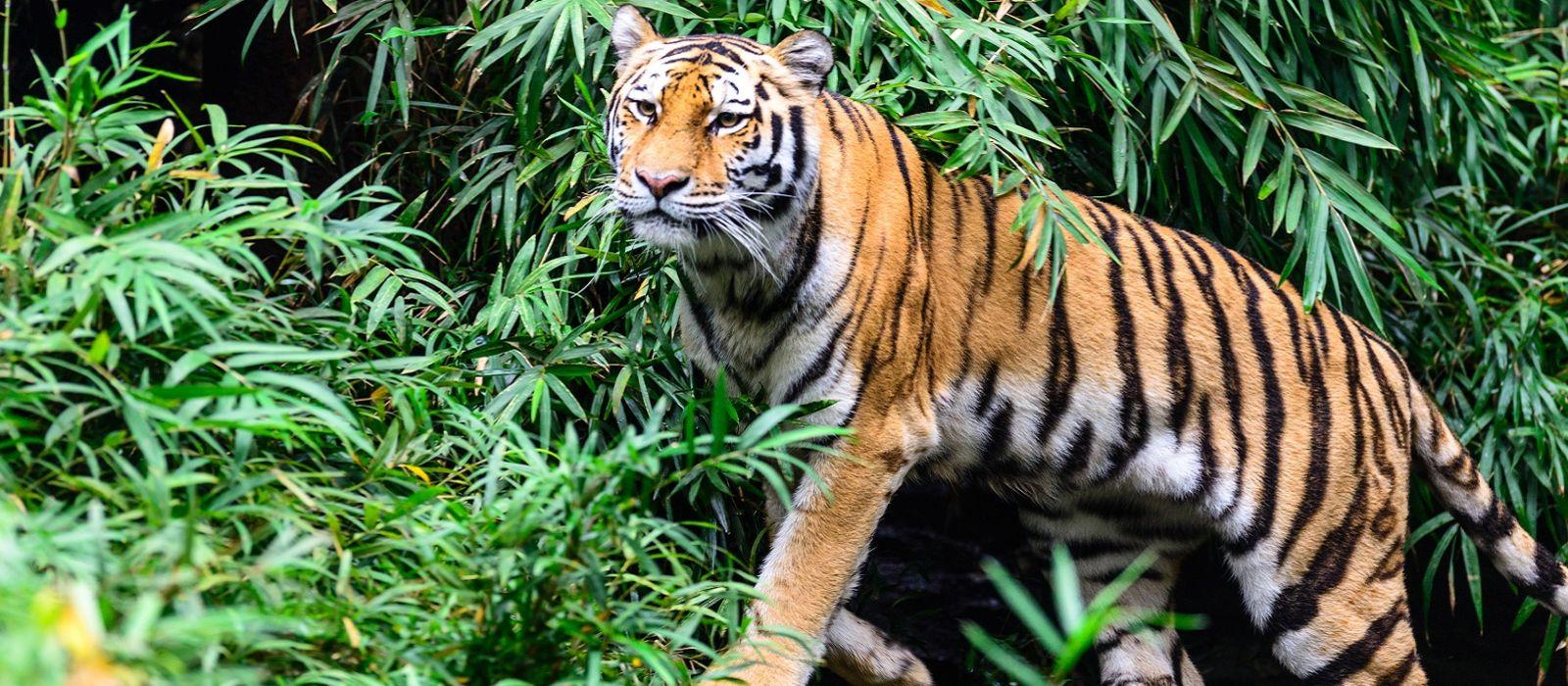 Oberoi Exclusive: Rajasthan's Heritage Cities and Safari Tour Trip 6