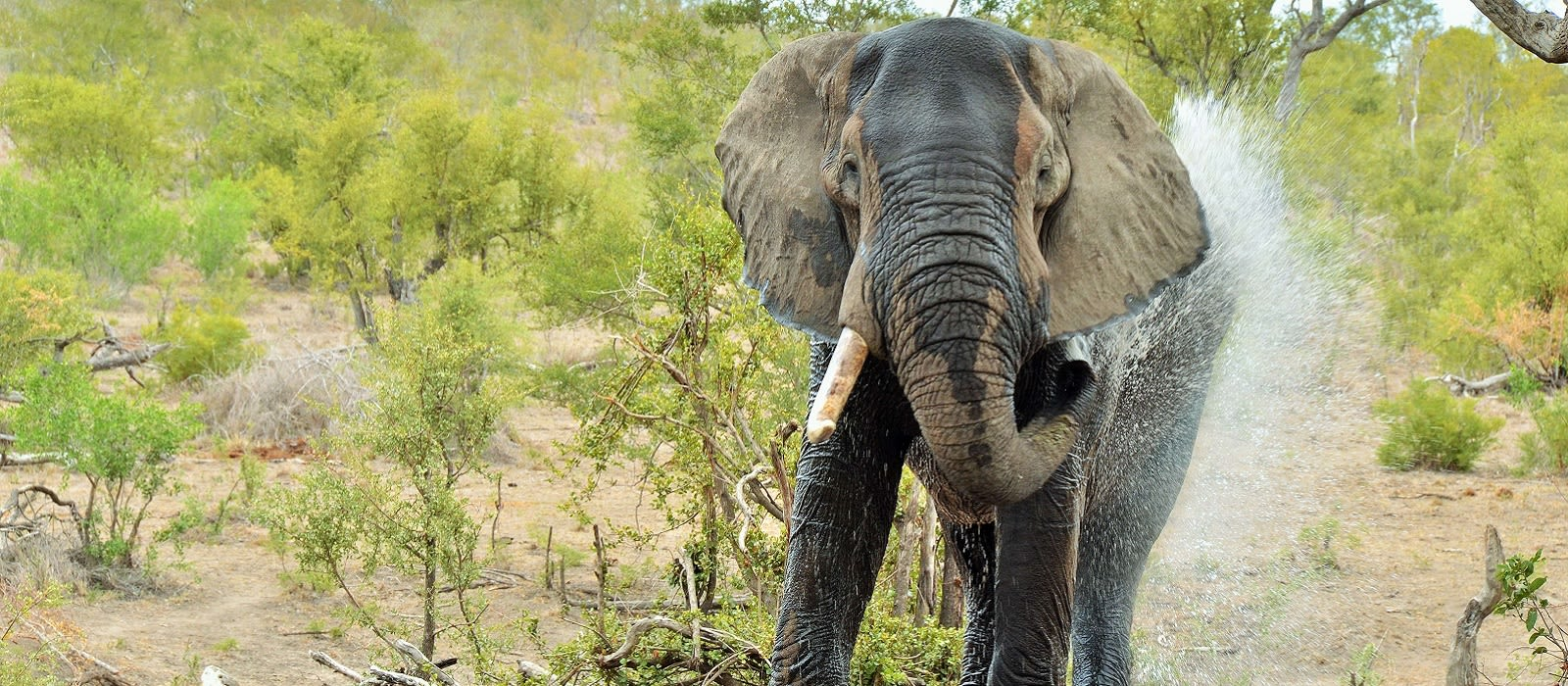 South Africa – Kruger to Cape Town Tour Trip 1