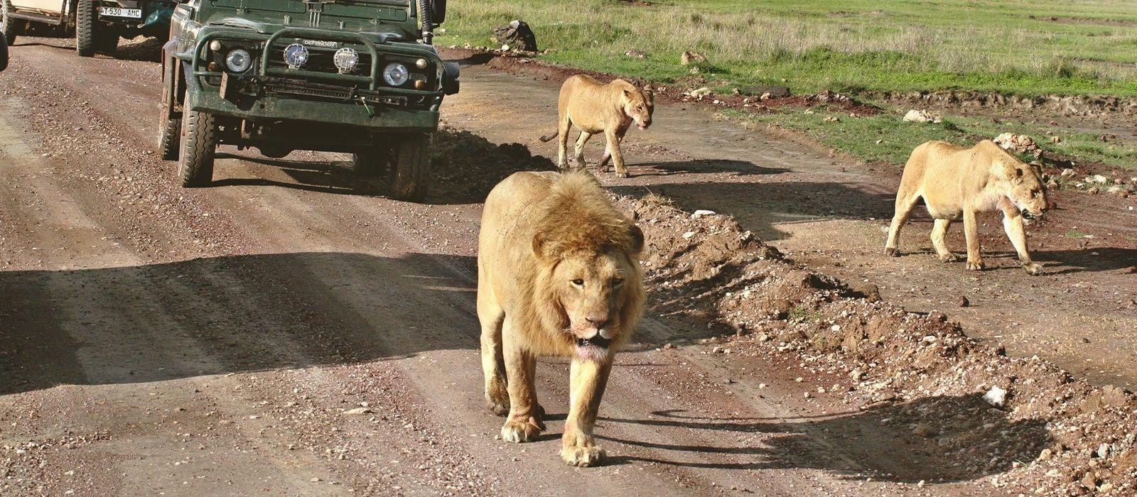 """Rundreise Östliches Südafrika: Höhepunkte der """"Rainbow Nation"""" Urlaub 1"""