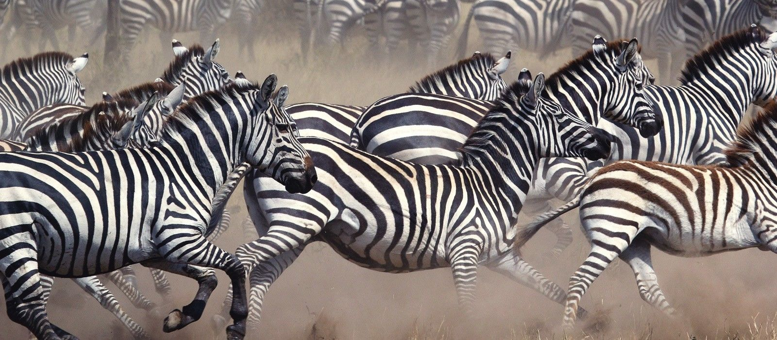 Tansania & Botswana: Vom Kilimandscharo zu den Viktoriafällen Urlaub 4