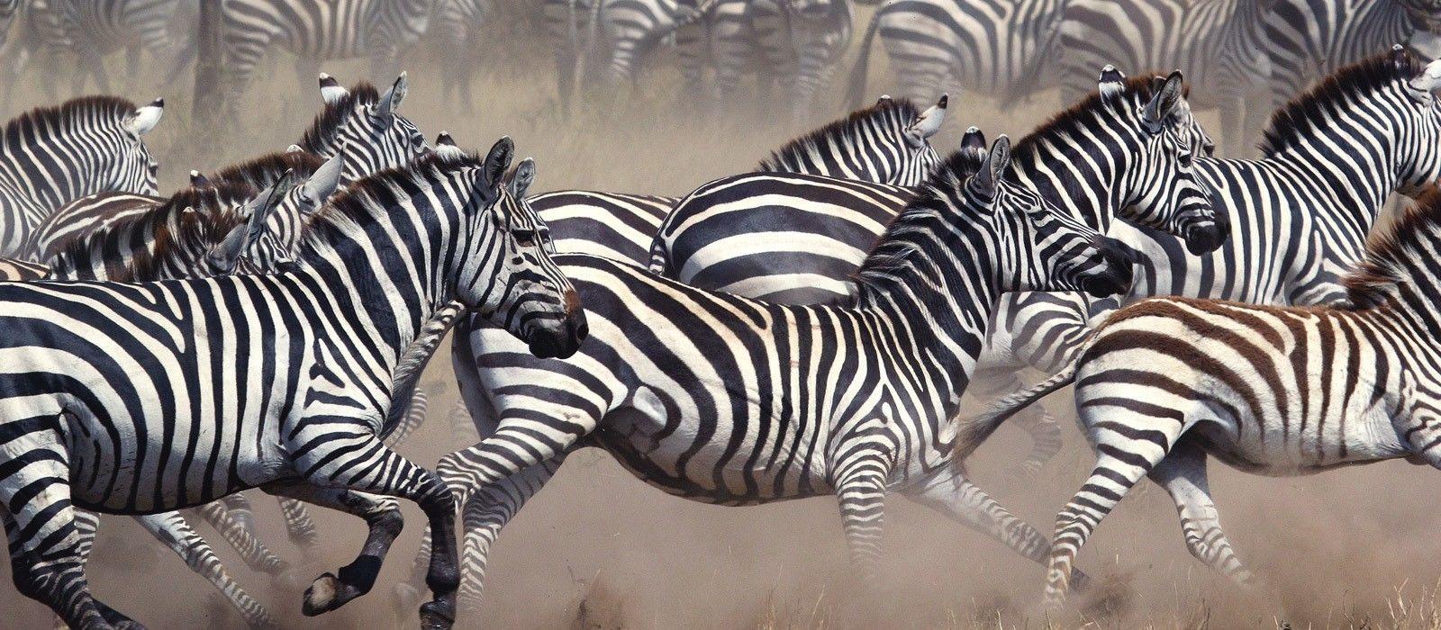 Tanzania and Botswana Safari Highlights Tour Trip 4