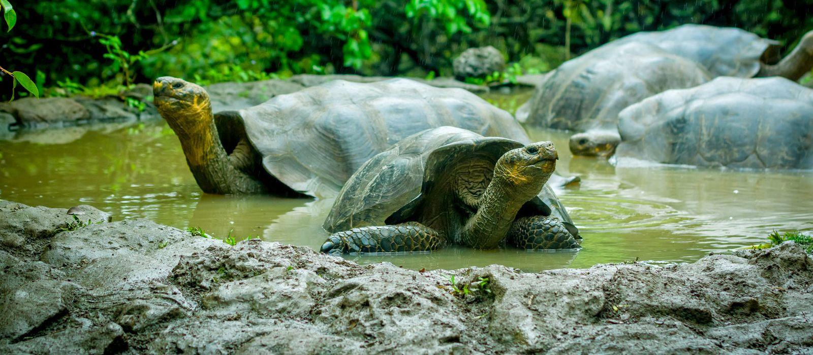 Ecuador – Die Geheimnisse von Galapagos Urlaub 5