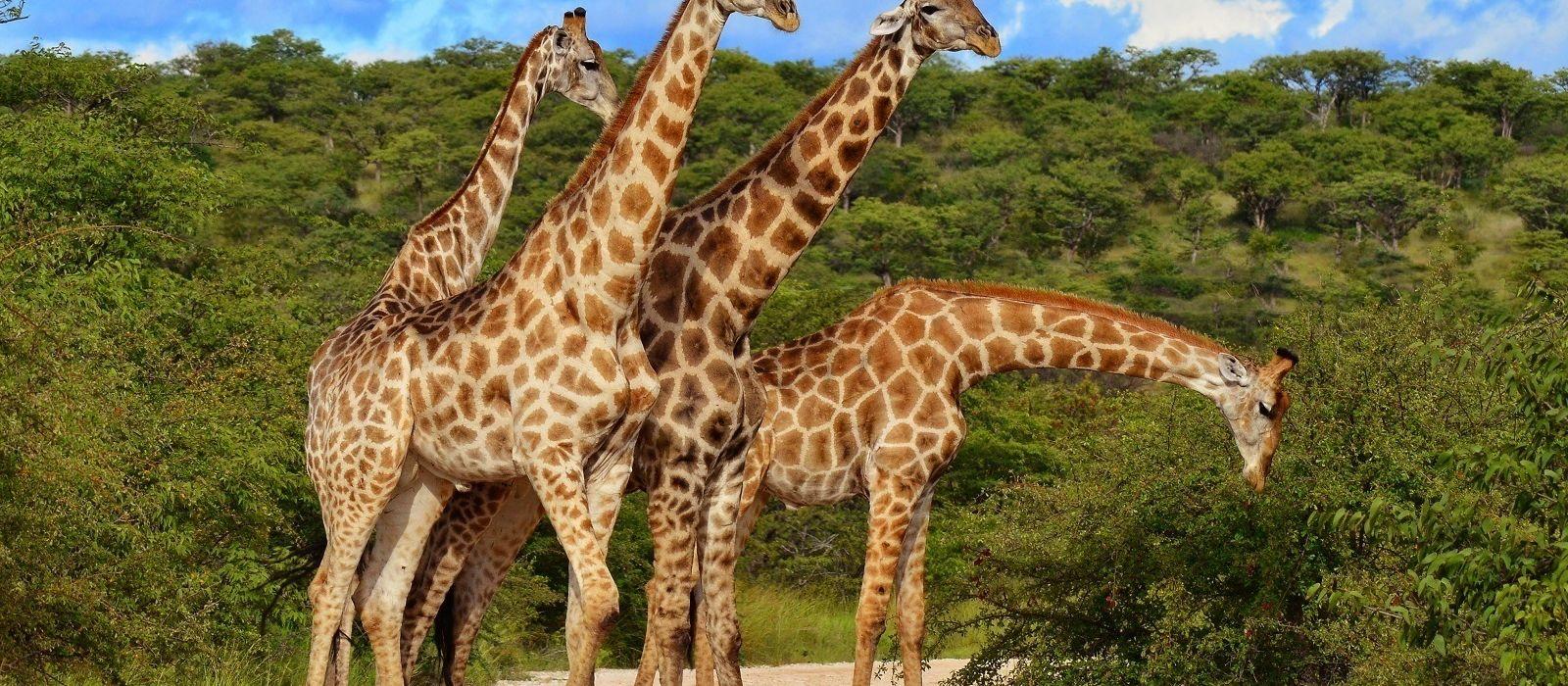 Kenia & Tansania Safarireise: Ungezähmte Wildnis Urlaub 6