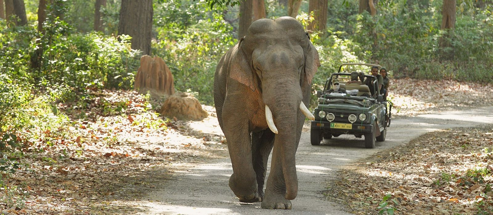 Nordindien Rundreise: Städte, Tempel & Safaris Urlaub 1