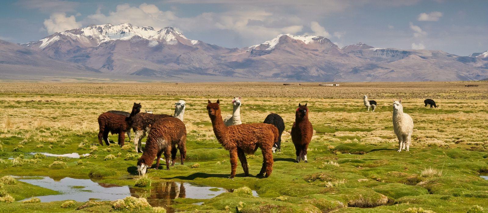 Bolivia: Color and History Tour Trip 3