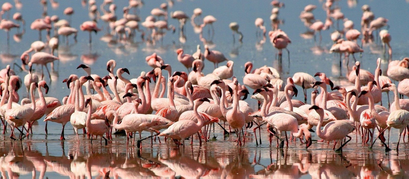 Kenia & Tansania Safarireise: Ungezähmte Wildnis Urlaub 1