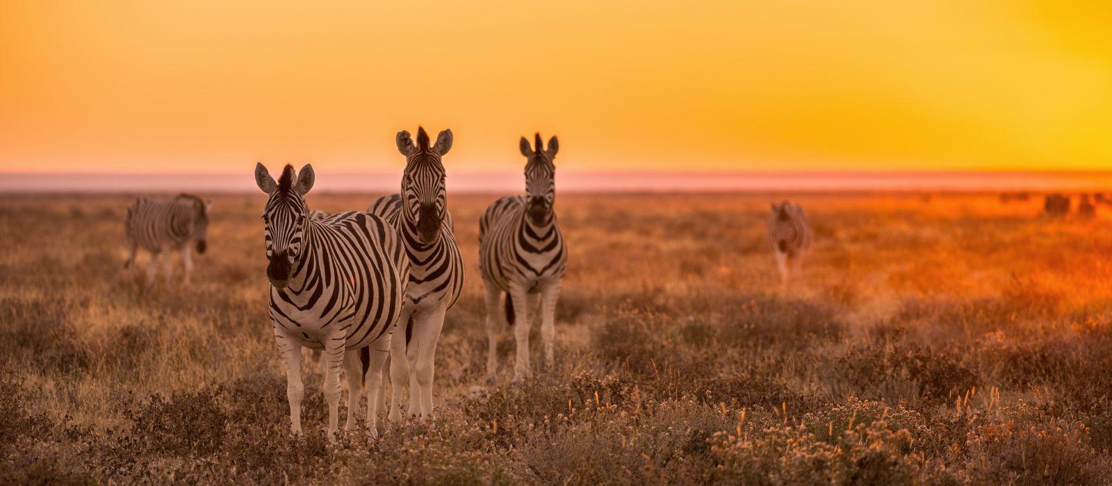 Einmalige Landschaften und exotische Tierwelt: Höhepunkte Namibias Urlaub 3