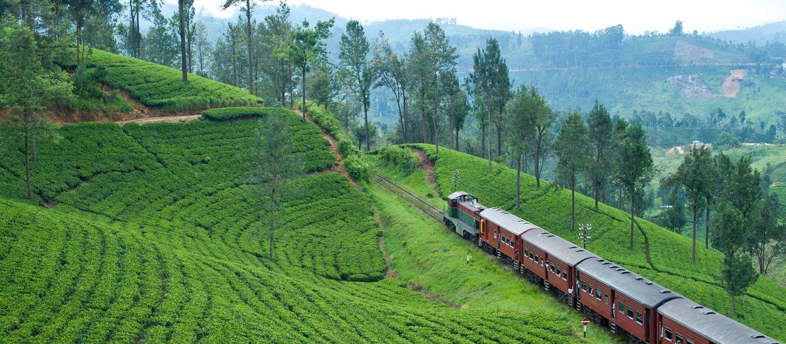 Sri Lanka – Regenwald, Tierwelt und historische Tempel Urlaub 3