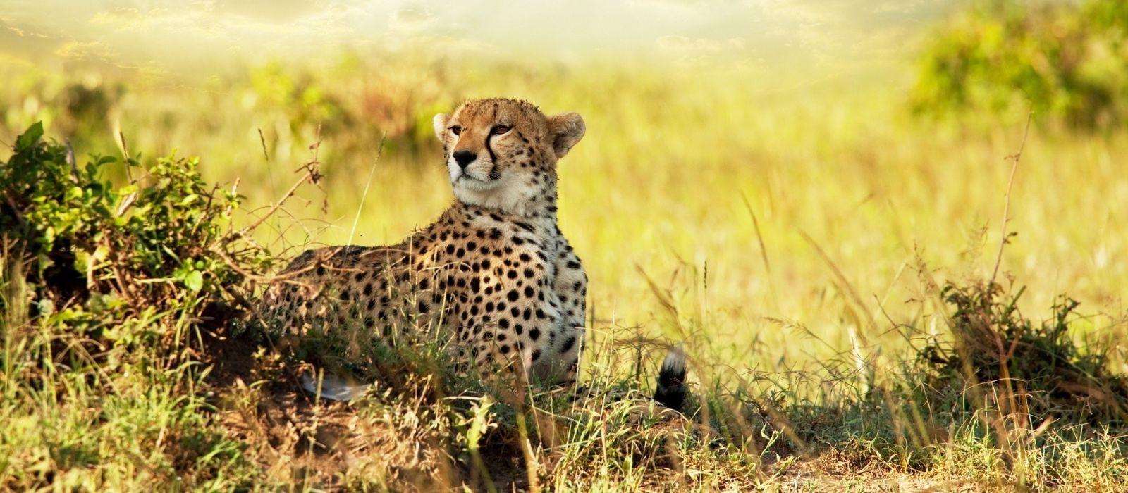 Tanzania – Southern Wilderness and Beach Tour Trip 1