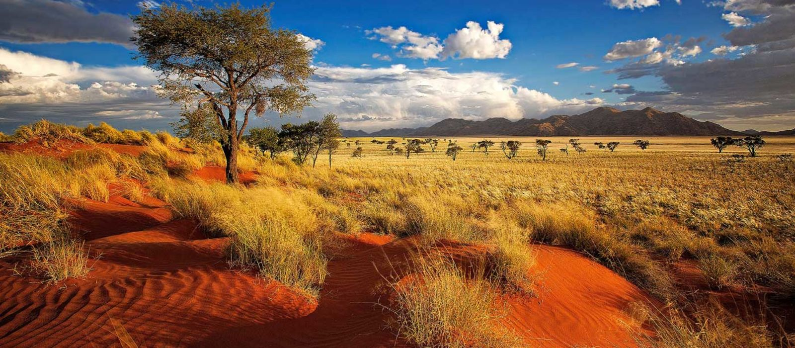 Kapstadt und Klassisches Namibia Urlaub 5