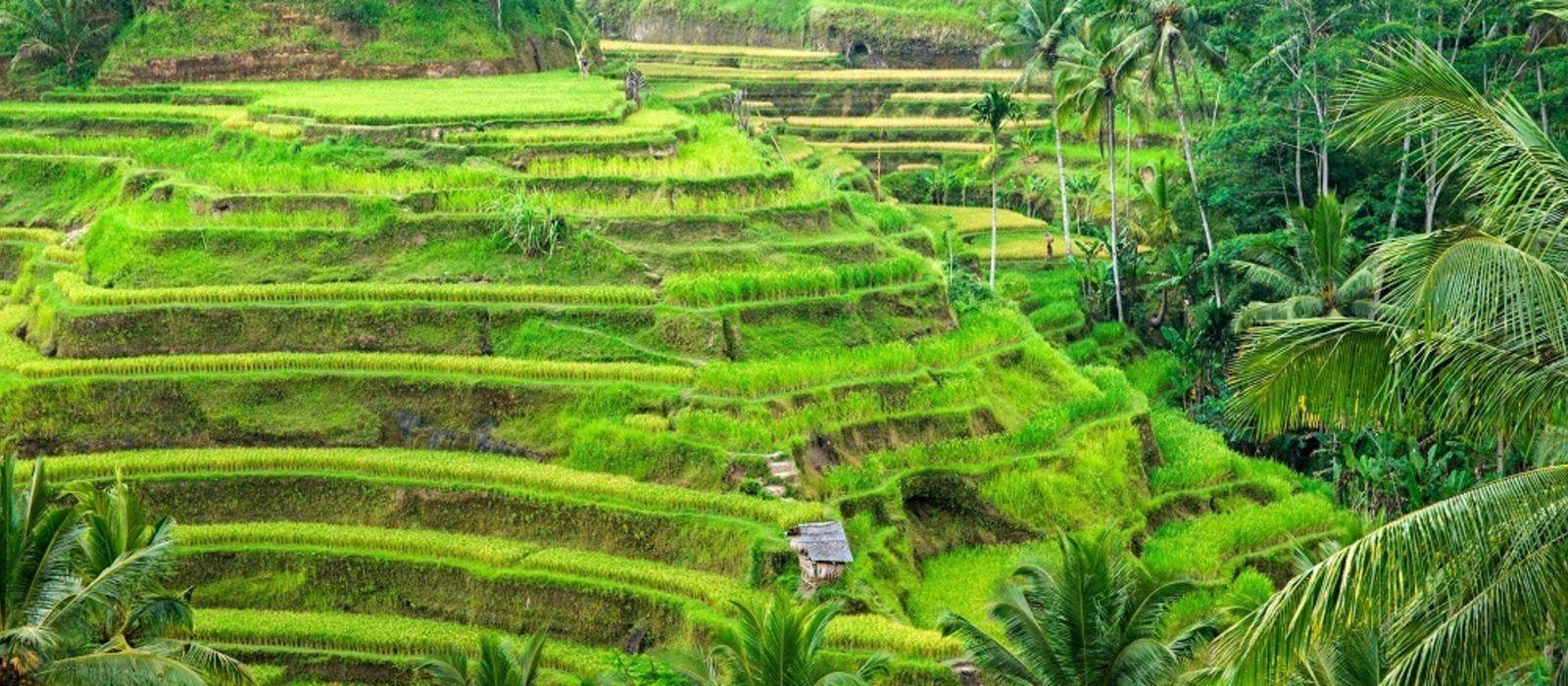 Indonesien Rundreise: Im Reich des Komododrachens Urlaub 2