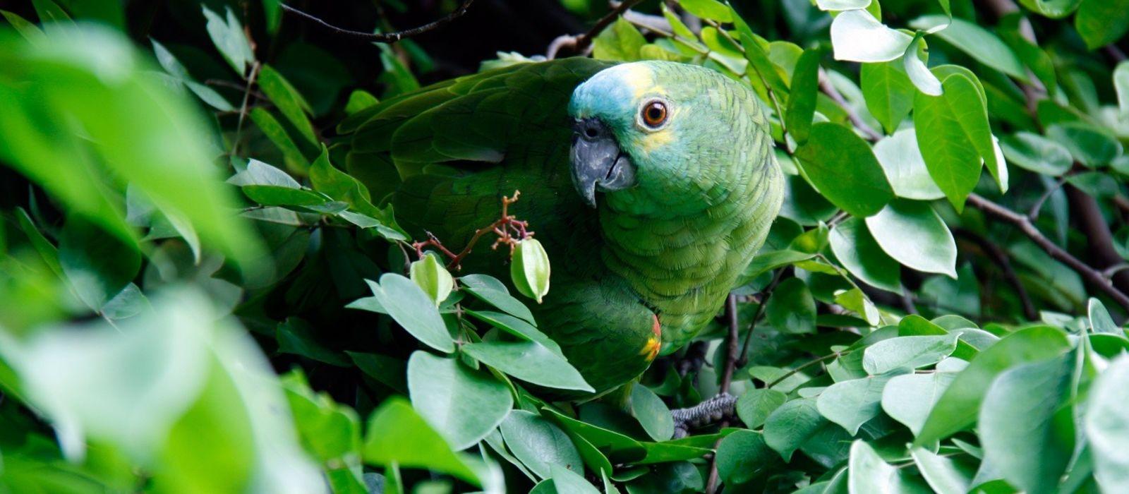 Brazil: Amazonas, Iguazu and Beach Bliss Tour Trip 4