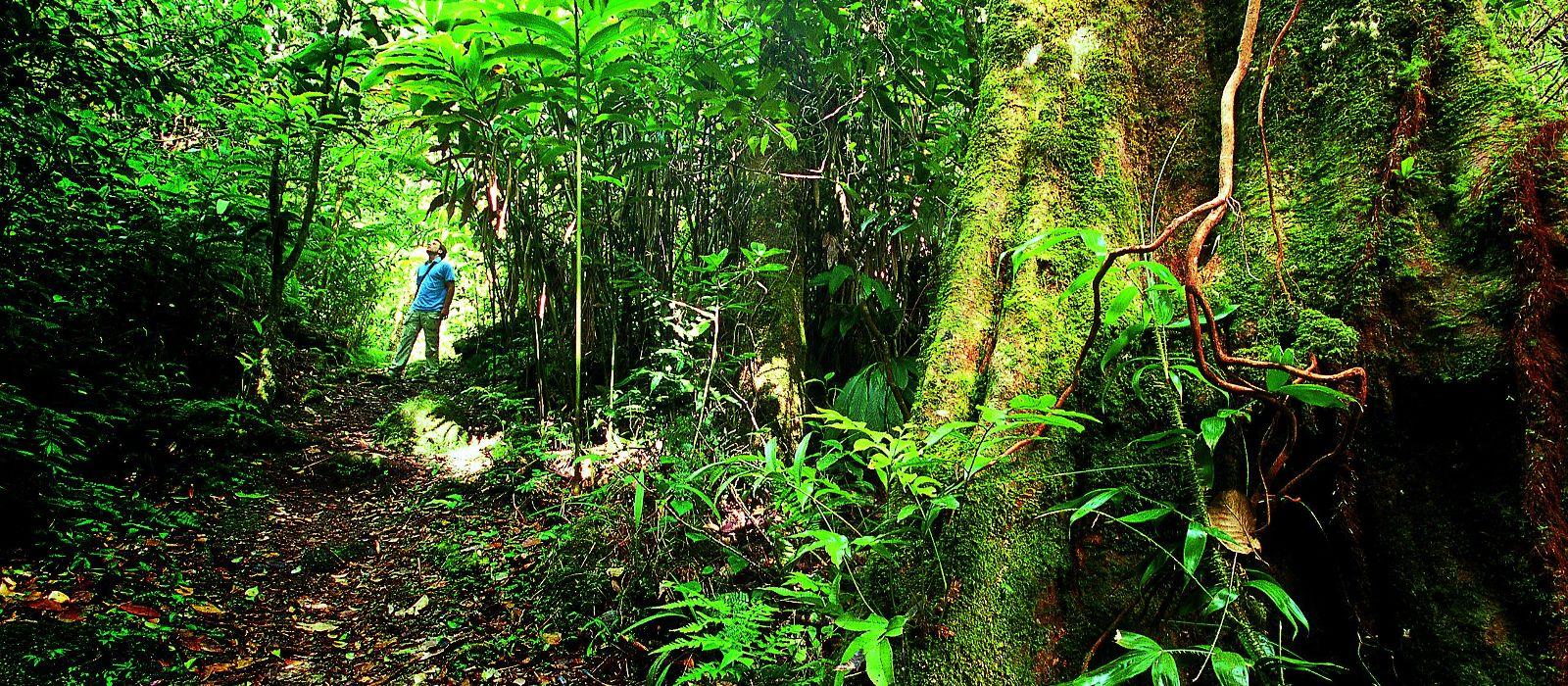 Reiseziel Taman Negara Nationalpark Malaysia