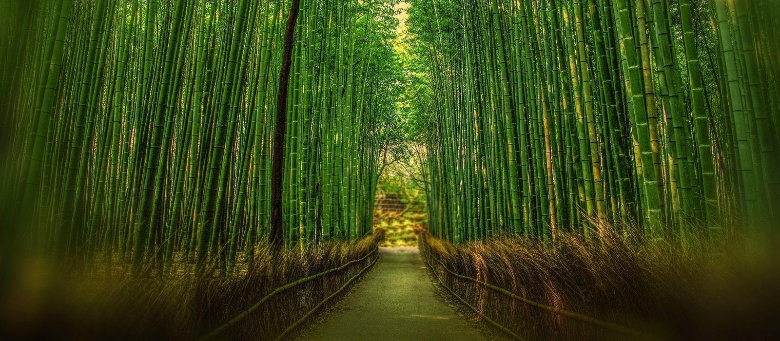 Just Japan – An Introduction Tour Trip 3