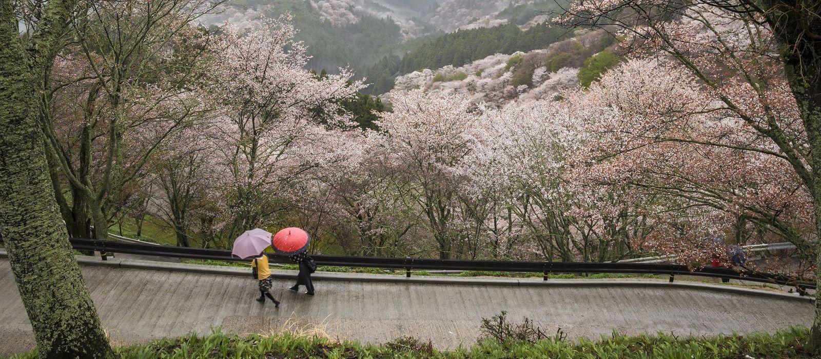 Auf den Spuren des Zen in Japan Urlaub 2