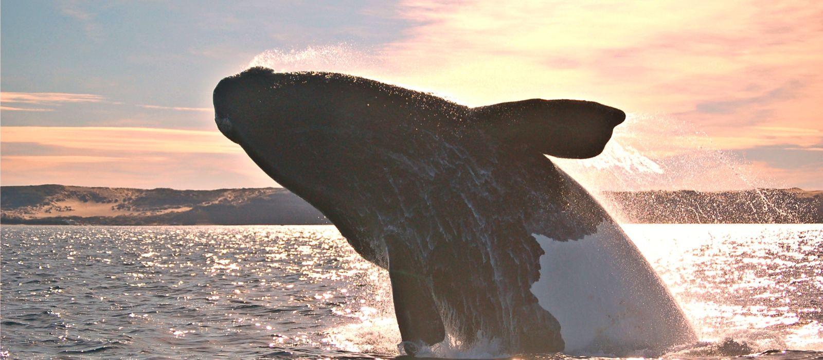 Wildlife Wonders of Argentina Tour Trip 2