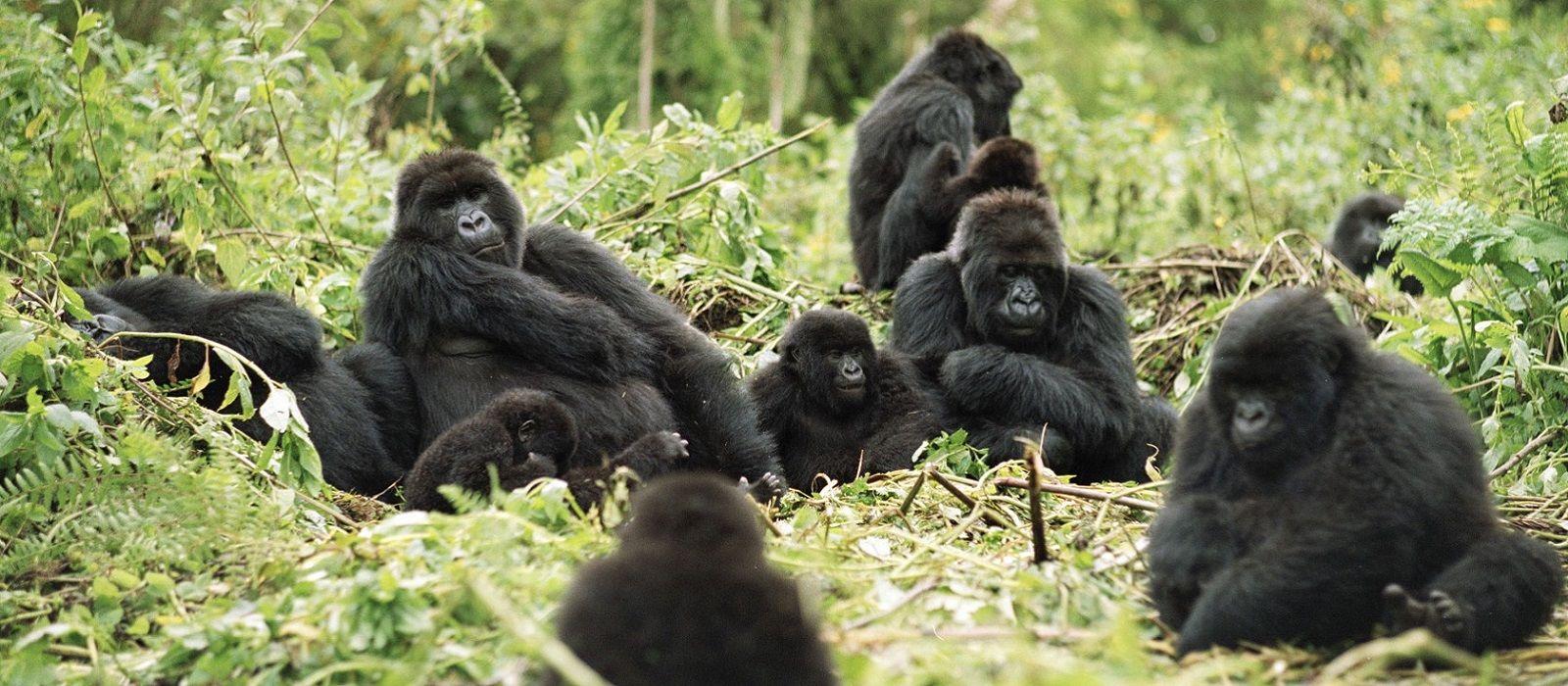 Gorillas, Great Migration and Indian Ocean Dreams Tour Trip 2