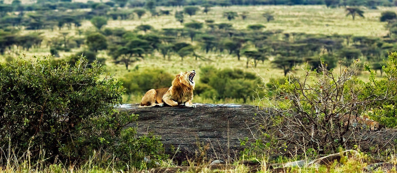 Lakeside Luxury and Wildlife in Tanzania Tour Trip 4