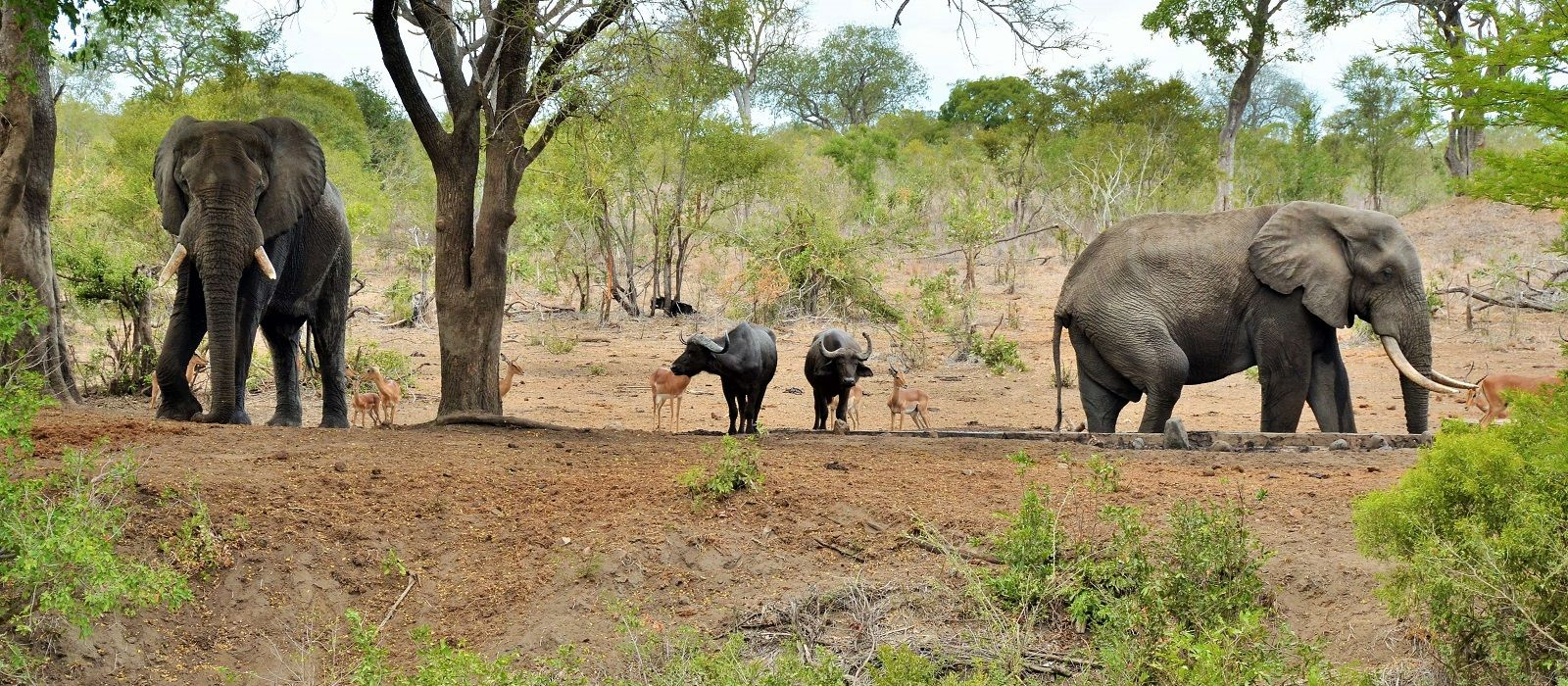 Cape Town, Safari and Exotic Island Vacation Tour Trip 3