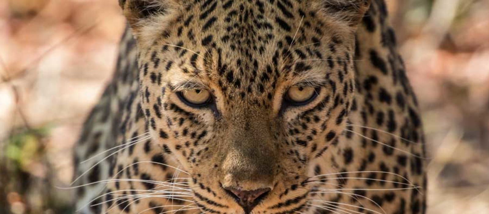 Malawi, Sambia und Mosambik: Safari, Malawisee und Strand Urlaub 2