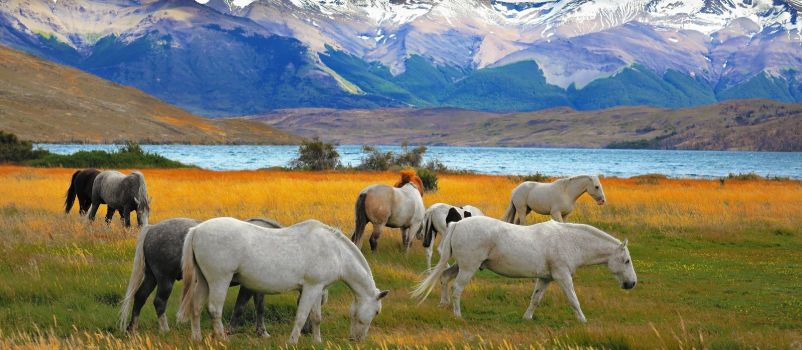 Chile: Lakes and Wine Tour Trip 4