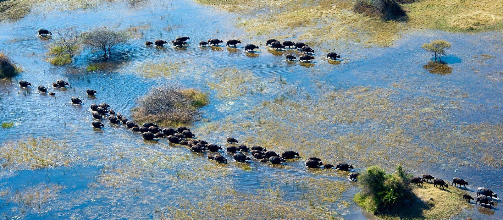 Botswana and Victoria Falls: Safari Magic Tour Trip 1