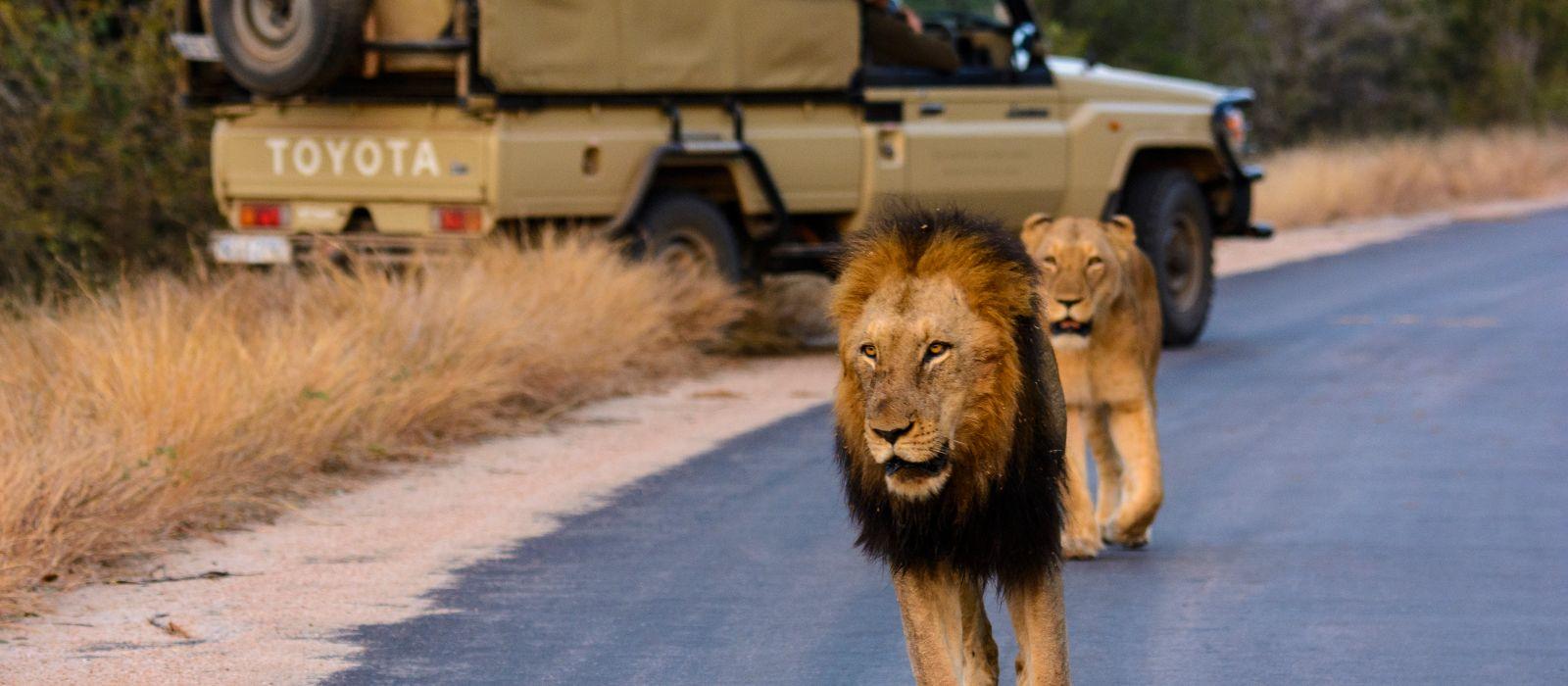 Brüllende Löwen und rauschende Wasserfälle: Südafrika, Simbabwe & Botswana Urlaub 2