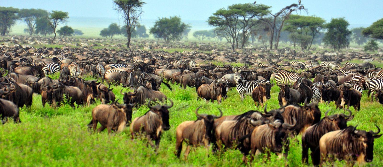 Safari Highlights of Tanzania, Botswana and Zambia Tour Trip 2