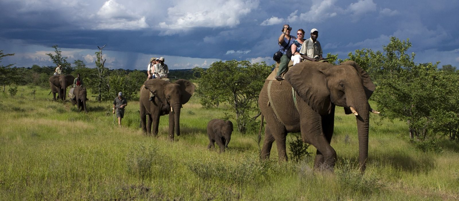 Southern Africa: Wildlife, Rovos Luxury and Cape Town Tour Trip 1