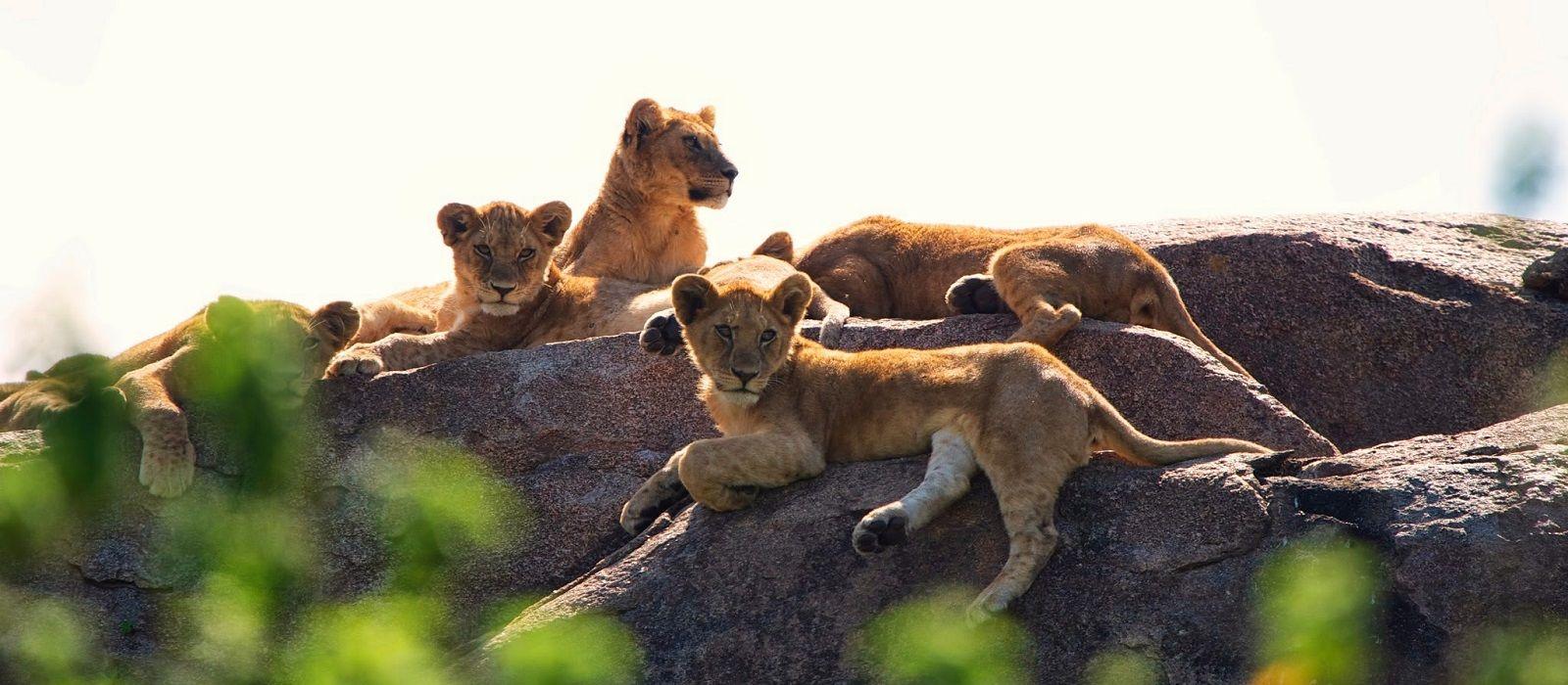 Tanzania, Zimbabwe and Botswana Safari Highlights Tour Trip 4