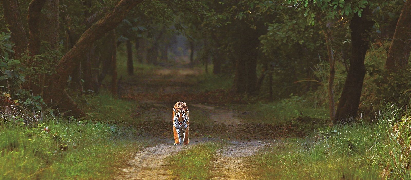 Destination Dudhwa National Park North India