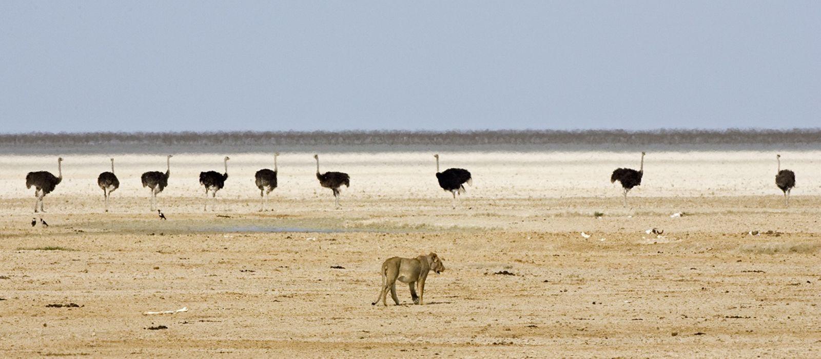 Namibia: The Luxury Explorer Tour Trip 2
