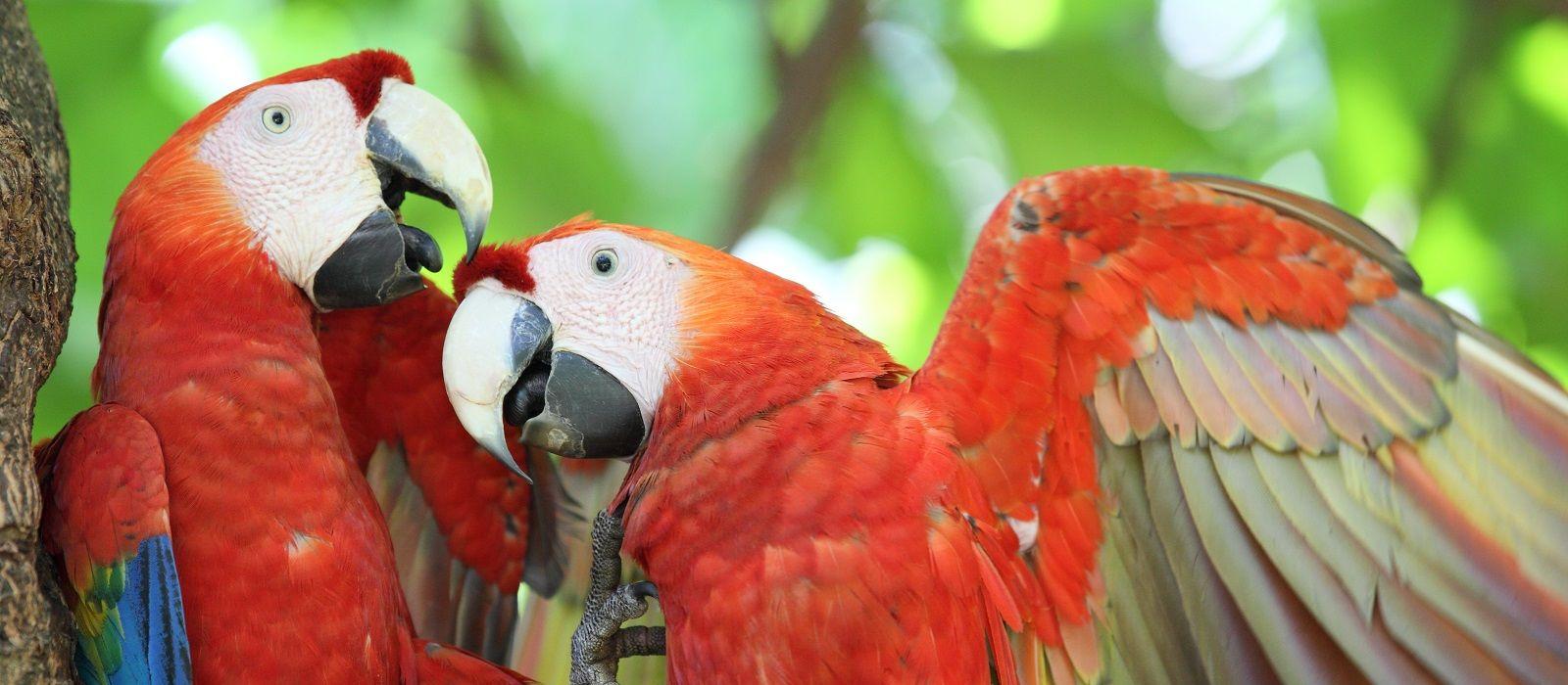Classic Costa Rica and Guatemala Tour Trip 3