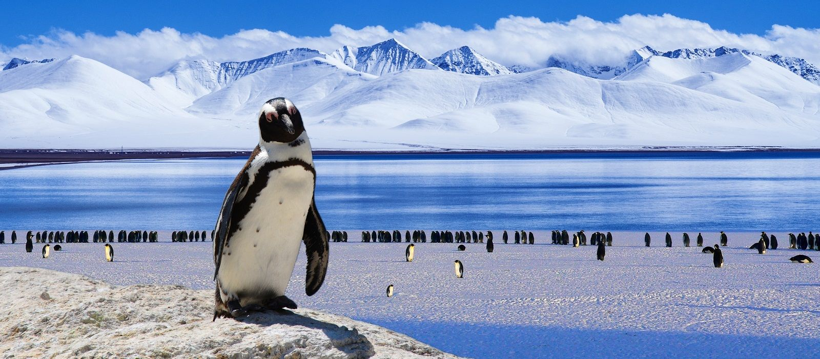 Destination Antarctica Antarctica