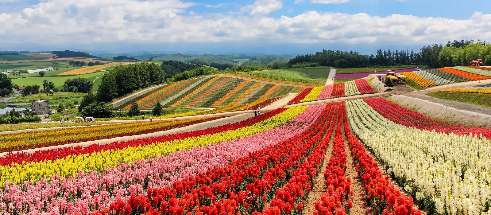 Japan: Northern Gems, Nature and Wildlife Tour Trip 5