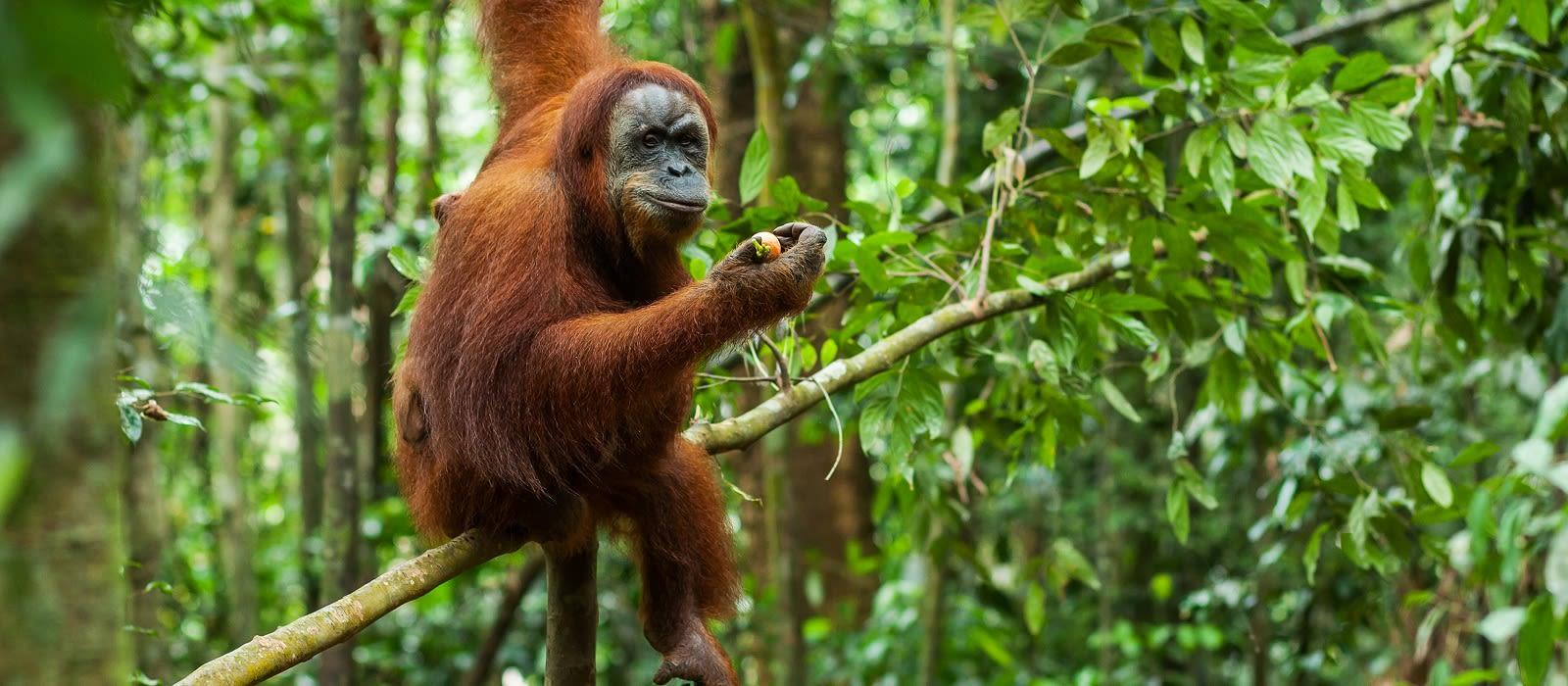Classic Sumatra and Java Tour Trip 1
