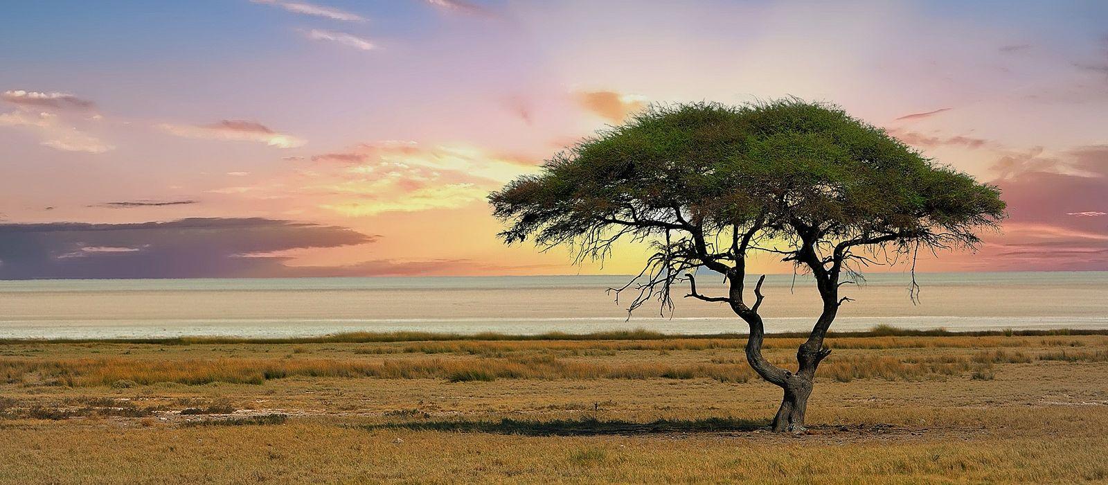 Familienreise durch Namibia für Selbstfahrer: Die Höhepunkte des Nordens Urlaub 3