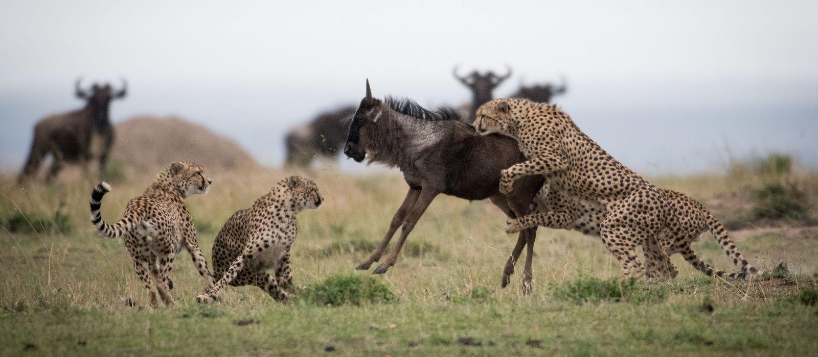 Kenia: Abseits bekannter Wege Urlaub 4