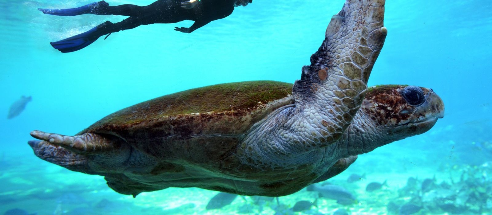 Australien: Großstadtleben & Great Barrier Reef Urlaub 2