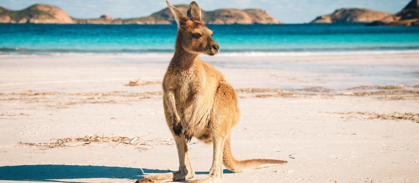 Australien: Metropolen, Nationalparks & Strände Urlaub 7