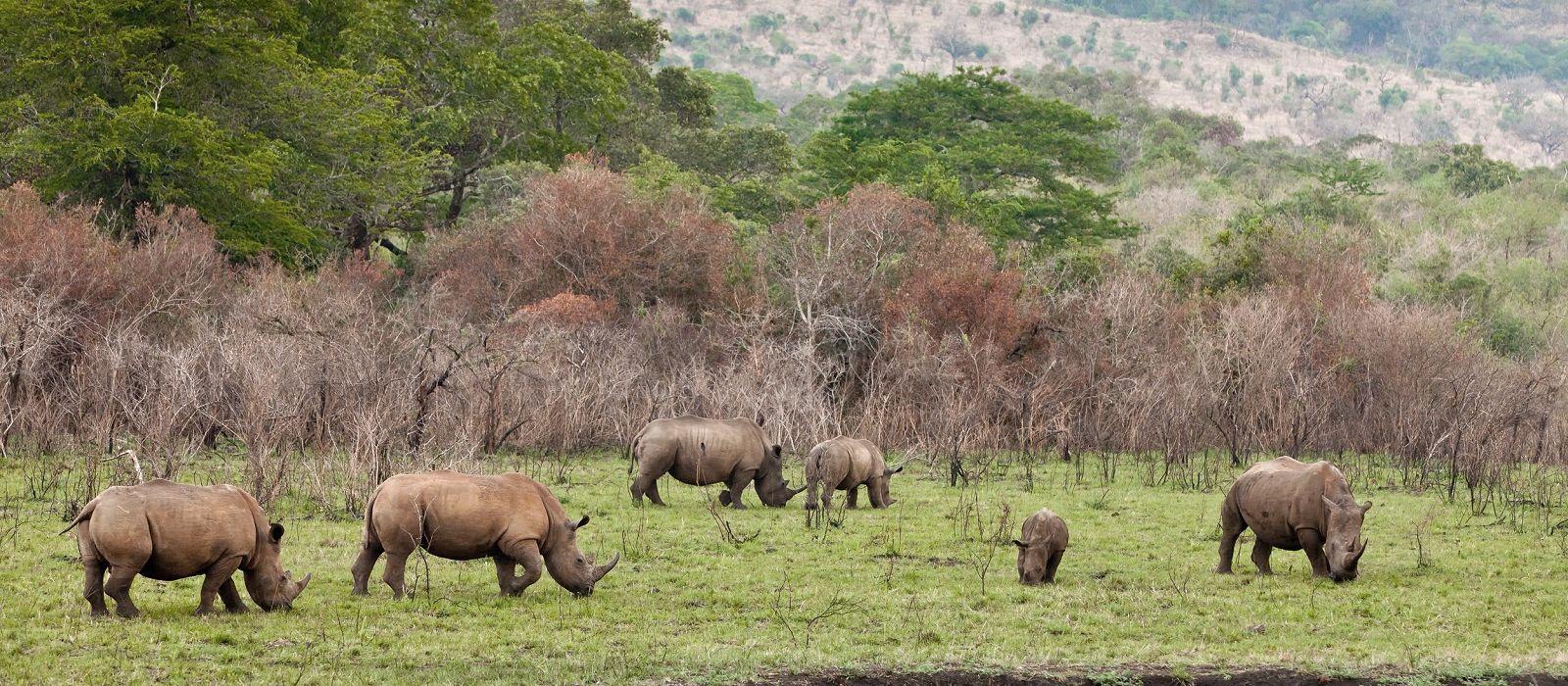 Südafrika Rundreise: Höhepunkte der Kapregion Urlaub 4