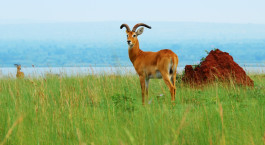 Reiseziel Lake Albert Uganda