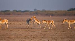 Reiseziel Rann von Kutch Zentral- & Westindien